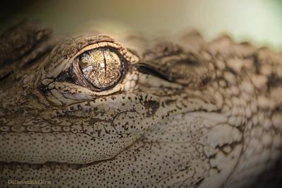 Photograph - Alligator by LeeAnn McLaneGoetz McLaneGoetzStudioLLCcom