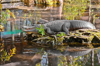 Crocodile Photograph - Alligator Mississippiensis by Christine Till