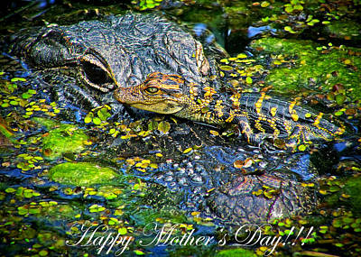 Photograph - Alligator Mother's Day by Mark Andrew Thomas