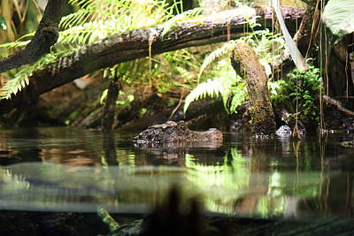 Alligator Photograph - Alligator - National Aquarium In Baltimore Md - 12124 by DC Photographer
