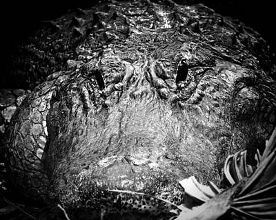 Alligator On Guard  Art Print by Mark Andrew Thomas