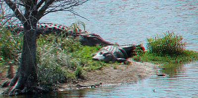 Photograph - Alligator Pair by Ron Davidson