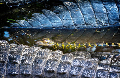 Artistic Photograph - Alligator Playpen by Mark Andrew Thomas