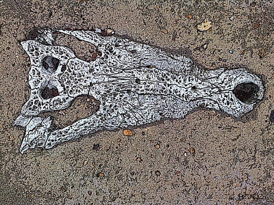 Painting - Alligator Skull Fossil 1 by George Pedro