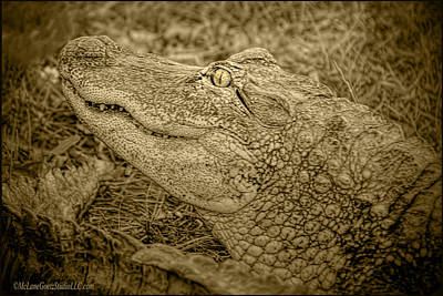 Photograph - Alligator Tail Black And White by LeeAnn McLaneGoetz McLaneGoetzStudioLLCcom