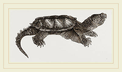 Alligator Drawing - Alligator Tortolse by Litz Collection