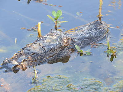Photograph - Alligator Up Close by Ellen Meakin
