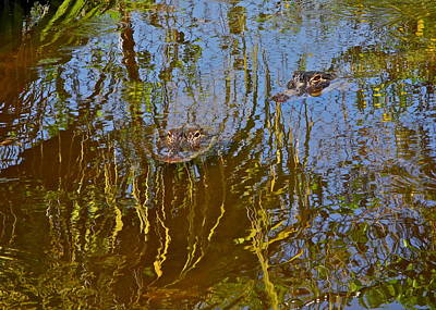 Photograph - Alligators In The Everglades by Kirsten Giving