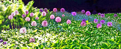 Photograph - Allium Garden In Bloom by Ausra Huntington nee Paulauskaite