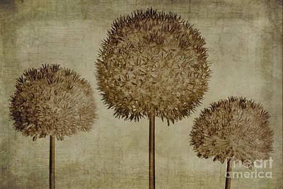 Allium Photograph - Allium Hollandicum Sepia Textures by John Edwards