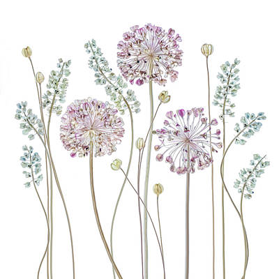 Flora Wall Art - Photograph - Allium by Mandy Disher
