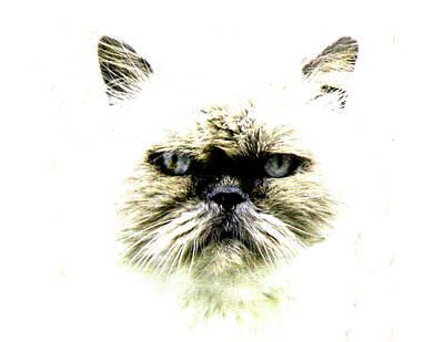 'allo Kitty Original by Paul Sutcliffe