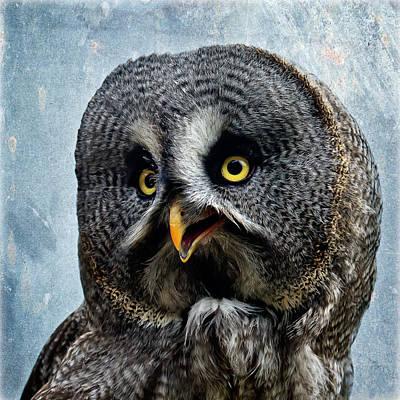 Allocco Della Lapponia - Tawny Owl Of Lapland Art Print