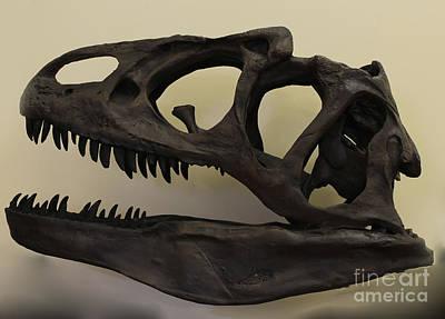 Photograph - Allosaurus Skull by Steven Parker