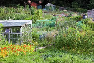 Garden Shed Photograph - Allotments by Ashley Cooper