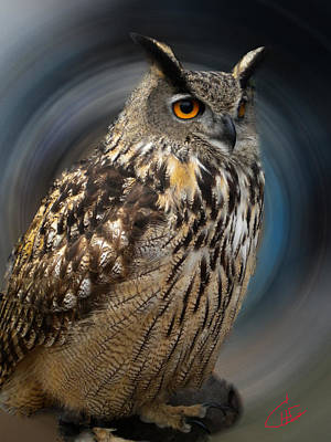 Almeria Wise Owl Living In Spain  Art Print