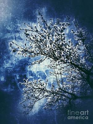 Almond Tree #2 Art Print by Angela Bruno