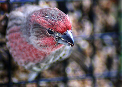 Photograph - Almost Angry Birds by Bill Pevlor