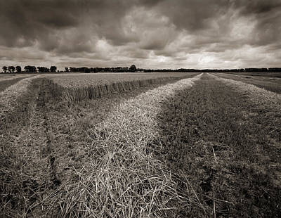 Photograph - Almost Harvested by Paul Indigo