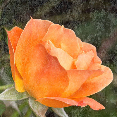 Photograph - Almost Perfect Orange Rose by Patti Deters