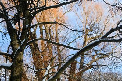 Polaroid Camera - Almost Spring by Munir Alawi