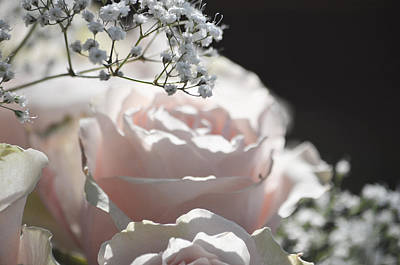 Almost White Roses Art Print