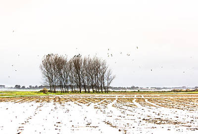 Photograph - Almost Winter by Edgar Laureano