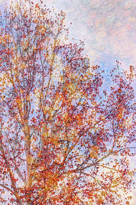 Almost Winter Print by Heidi Smith