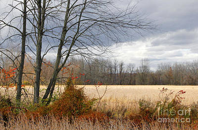 Photograph - Almost Winter by Mariarosa Rockefeller