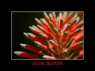 Photograph - Aloe Bloom Window by David Weeks