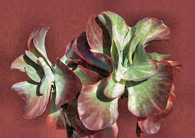 Aloe Design Art Print by Rosalie Scanlon