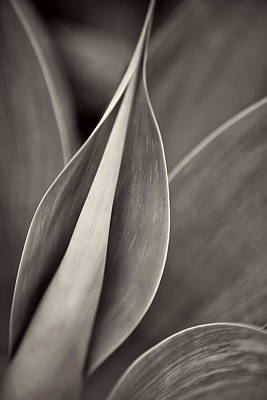 Photograph - Aloe Plant In Monotone by Pictorial Decor