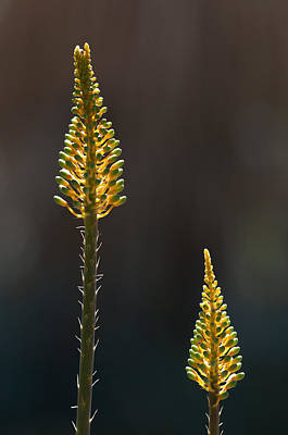 Photograph - Aloe Plant by Tam Ryan