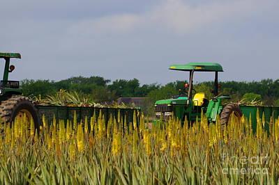 Photograph - Aloe Vera Farming by Rachel Munoz Striggow