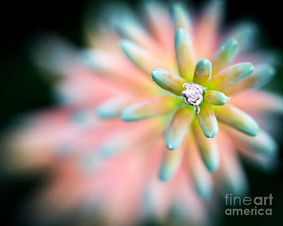 Aloe Vera Flower Art Print by Eyzen M Kim