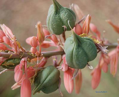 Target Threshold Nature Royalty Free Images - Aloe1-1 Royalty-Free Image by Tamara Kulish