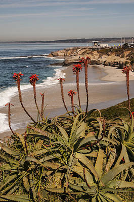 Photograph - Aloes At La Jolla Cove 2 by Lee Kirchhevel