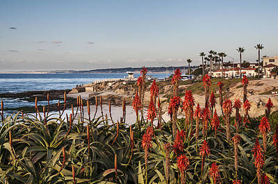Photograph - Aloes At La Jolla Cove by Lee Kirchhevel