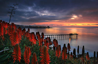 Aloes Last Light Art Print by Scott Cunningham