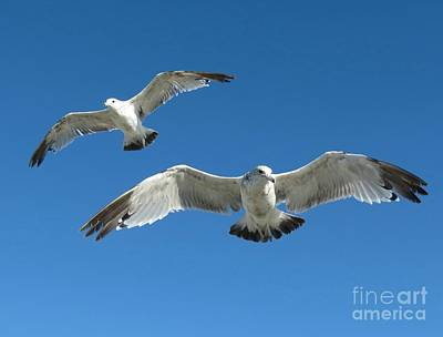 Photograph - Aloft by Chris Anderson