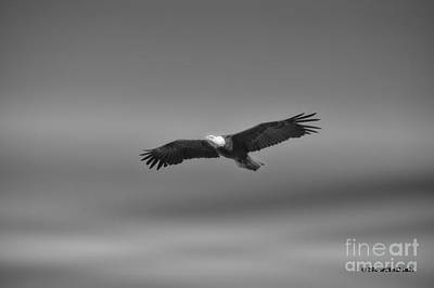 Photograph - Aloft by Gail Bridger