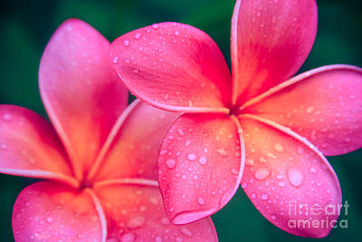 Aloha Hawaii Kalama O Nei Pink Tropical Plumeria Art Print by Sharon Mau