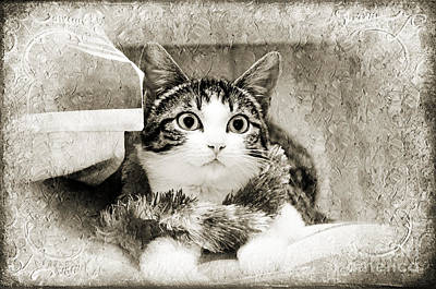 One Animal Mixed Media - Aloha Kitty Painterly by Andee Design