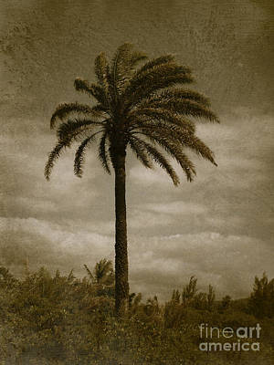 Aloha Palm - No.2047 Art Print by Joe Finney