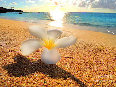 Photograph - Aloha Paradise by Kristine Merc