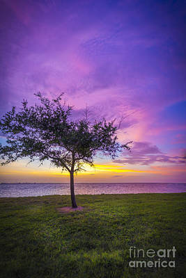 Oats Photograph - Alone At Sunset by Marvin Spates