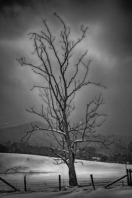Photograph - Alone At The End Of The Storm by John Haldane