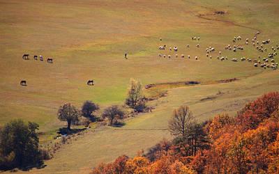Photograph - Alone Betwin Animals  by Svetoslav Sokolov