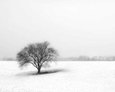 Trees In Snow Photograph - Alone by Don Spenner