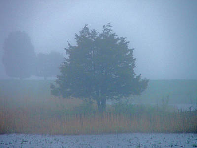 Photograph - Alone In The Fog by Nancy Landry